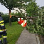 Technischer Einsatz – umgestürzter Baum am 29.07.2016